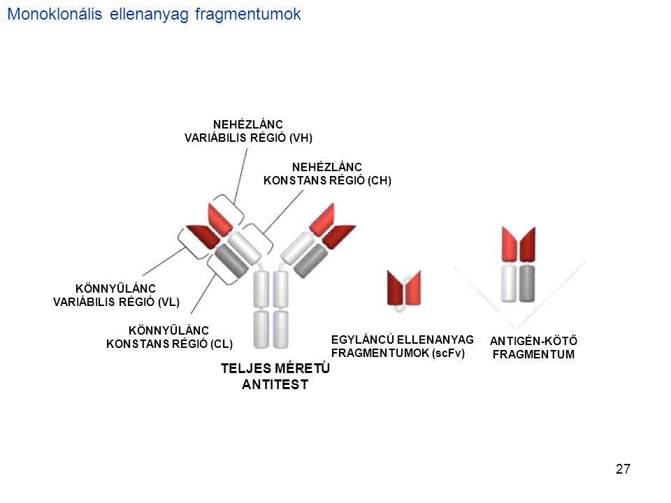 Monoklonális ellenanyag fragmentumok