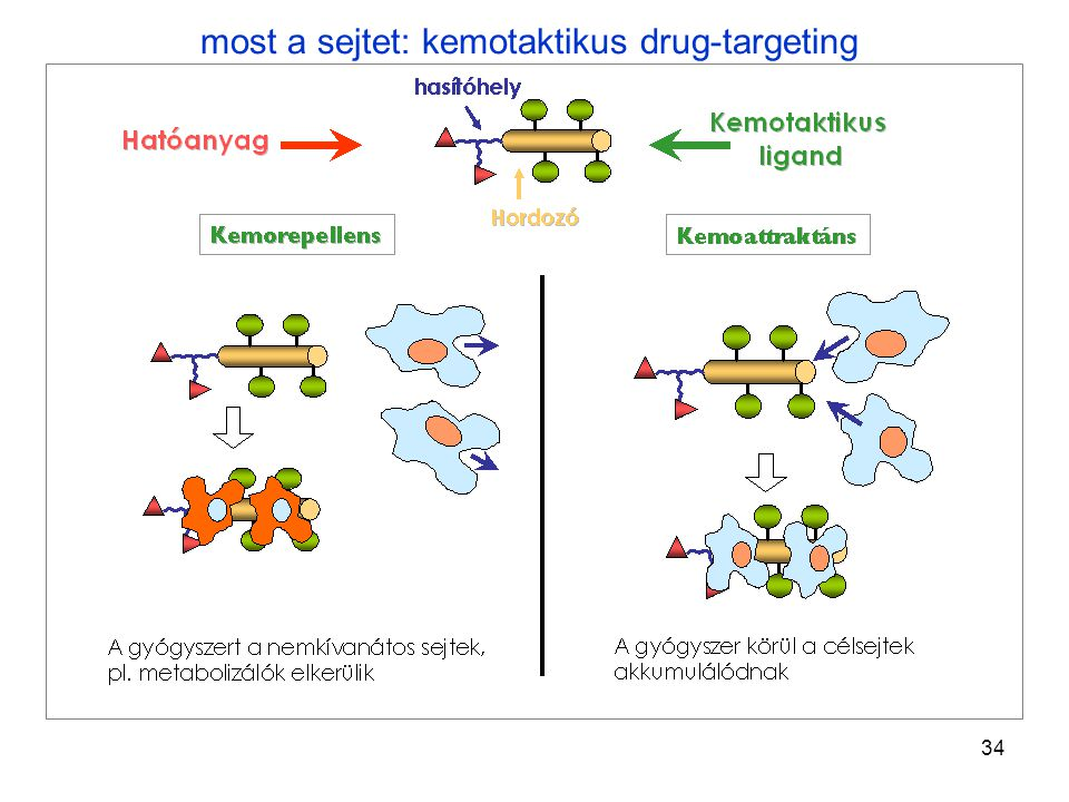 most a sejtet: kemotaktikus drug-targeting