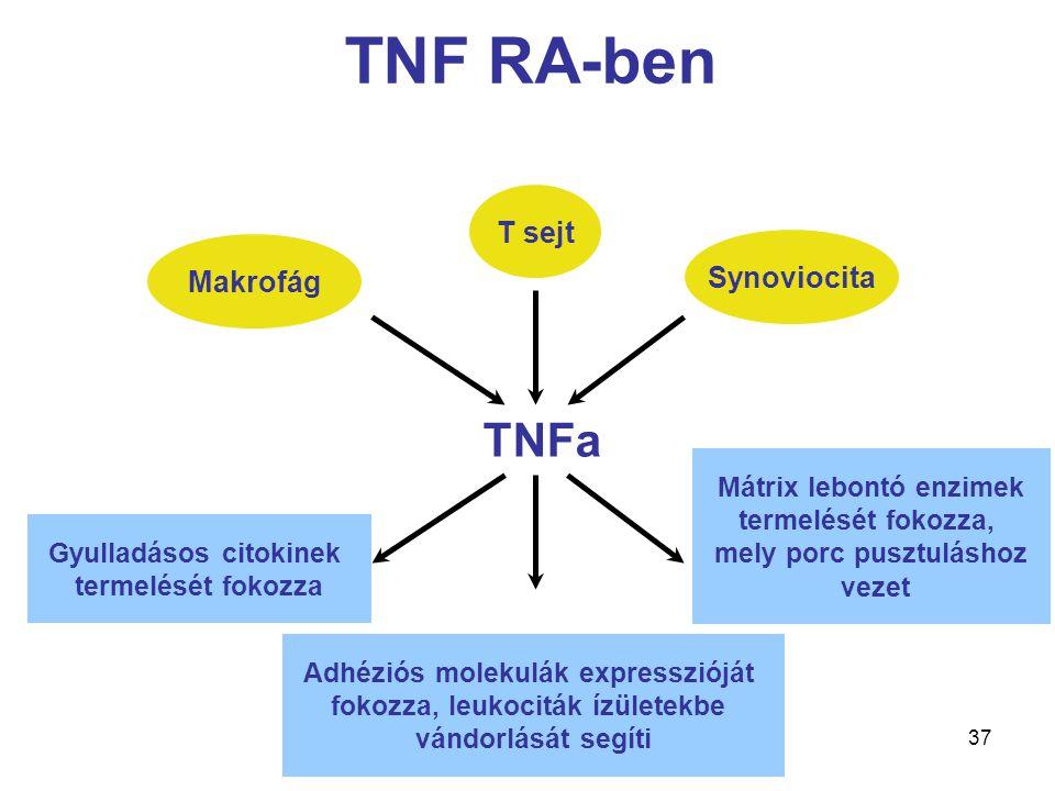 TNF RA-ben TNFa T sejt Synoviocita Makrofág Mátrix lebontó enzimek