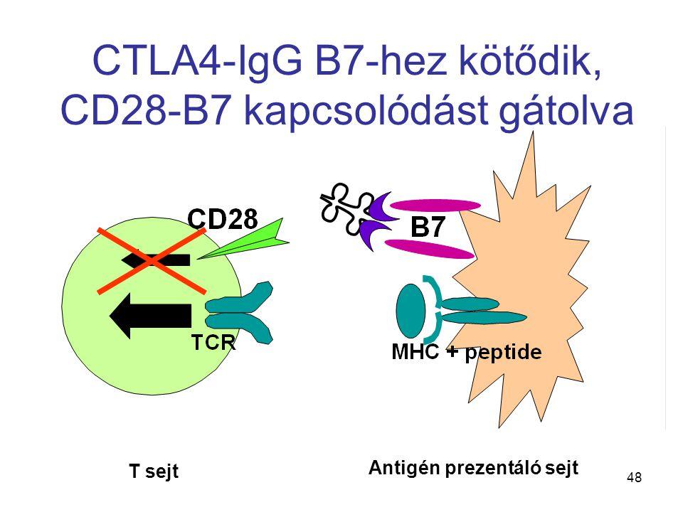 CTLA4-IgG B7-hez kötődik, CD28-B7 kapcsolódást gátolva