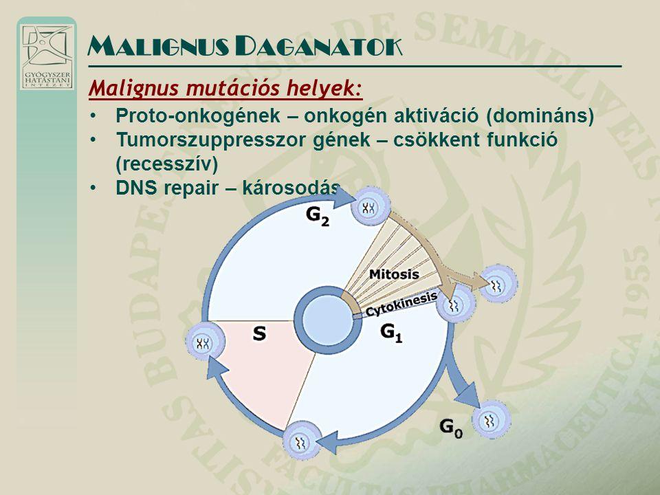 MALIGNUS DAGANATOK Malignus mutációs helyek: