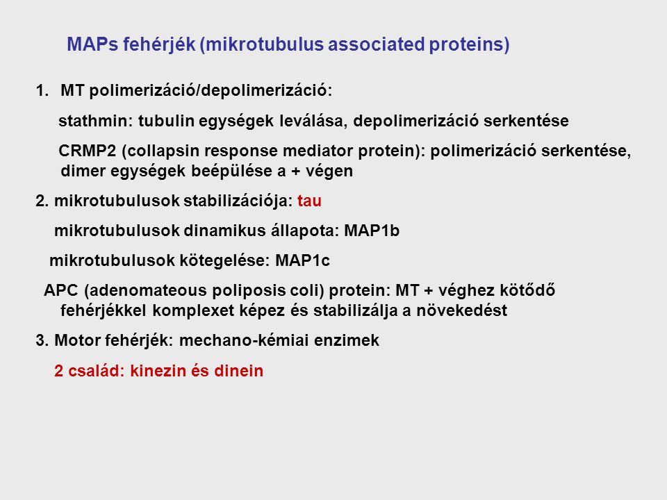 MAPs fehérjék (mikrotubulus associated proteins)
