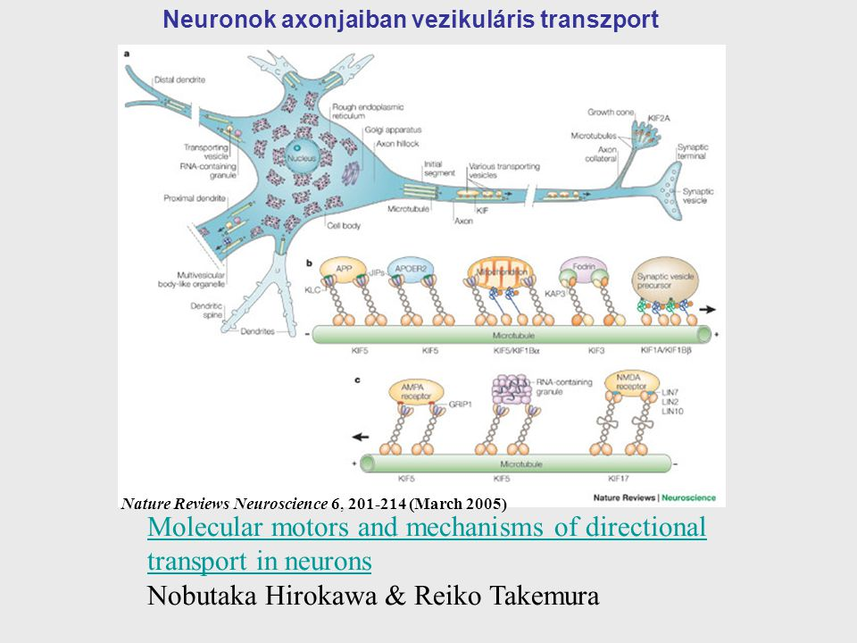 Nature Reviews Neuroscience 6, 201-214 (March 2005)