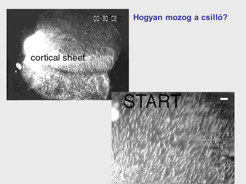 Hogyan mozog a csilló
