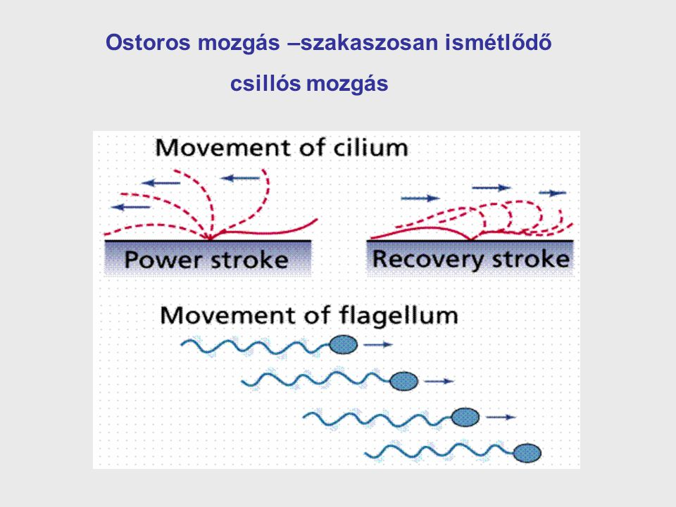Ostoros mozgás –szakaszosan ismétlődő