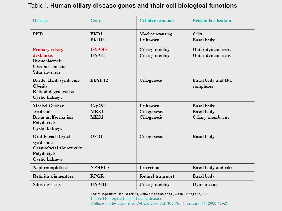 Table I. Human ciliary disease genes and their cell biological functions