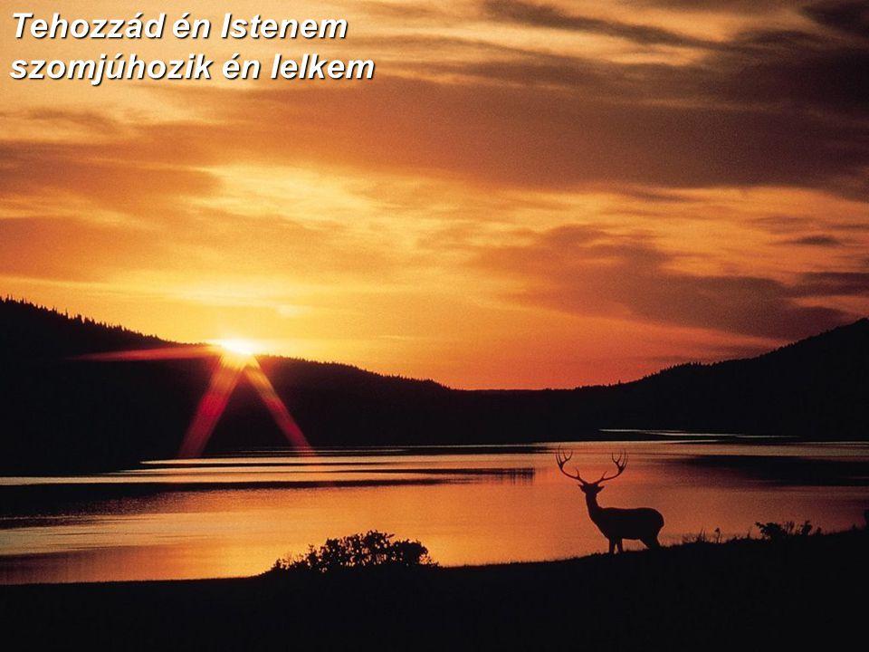 Tehozzád én Istenem szomjúhozik én lelkem