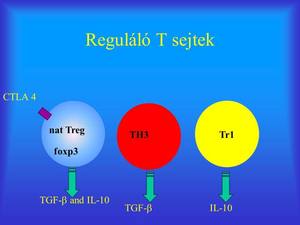 Reguláló T sejtek CTLA 4 nat Treg TH3 Tr1 foxp3 TGF- and IL-10 TGF-