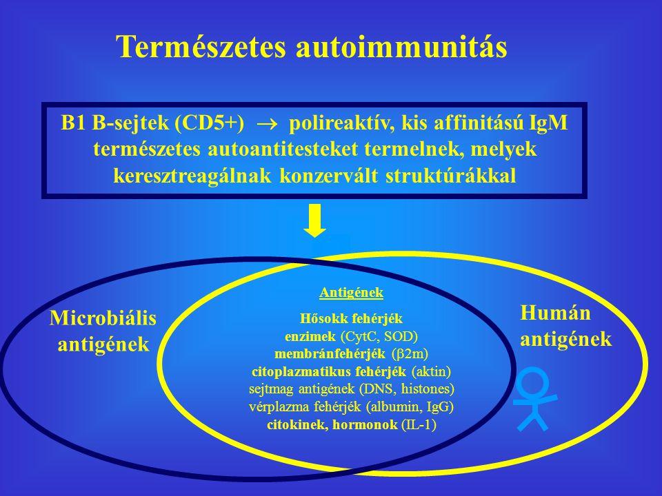 Természetes autoimmunitás Microbiális antigének