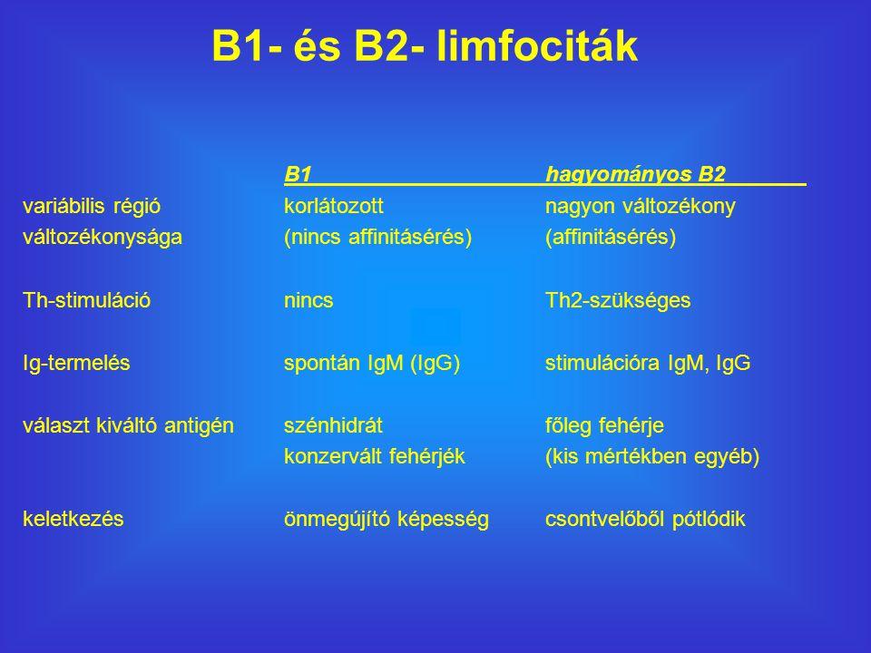 B1- és B2- limfociták B1 hagyományos B2