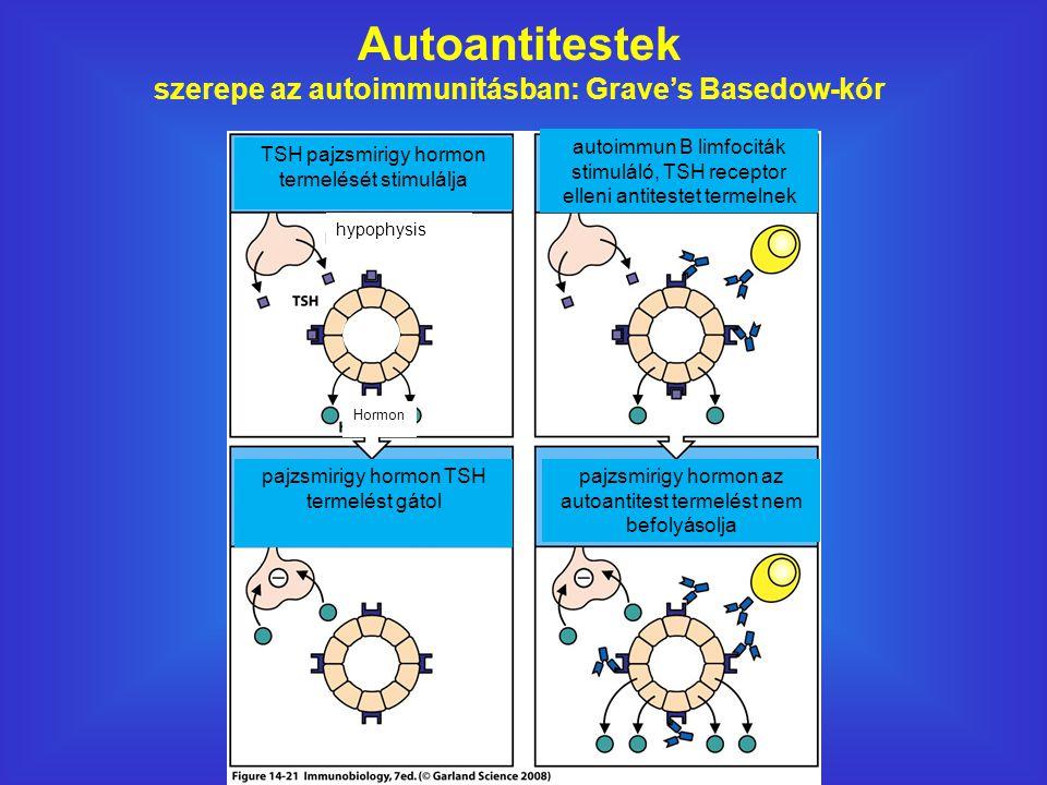 Autoantitestek szerepe az autoimmunitásban: Grave's Basedow-kór