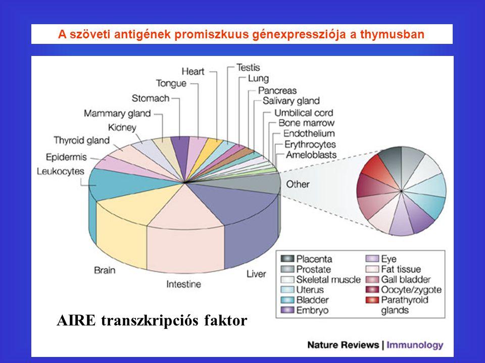 A szöveti antigének promiszkuus génexpressziója a thymusban