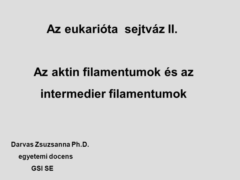Az eukarióta sejtváz II.