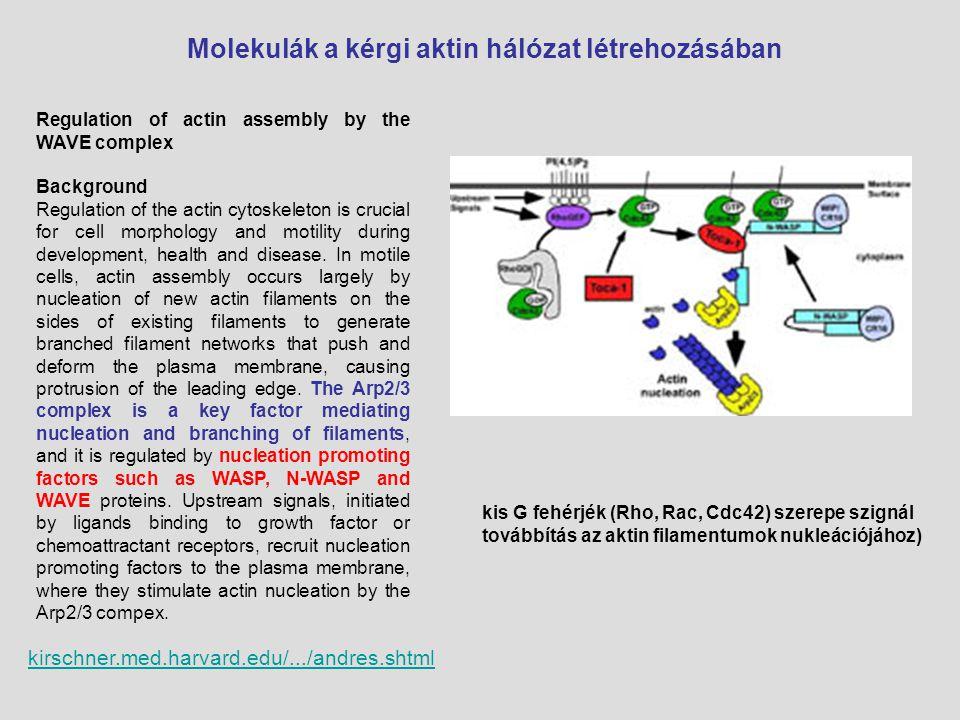 kirschner.med.harvard.edu/.../andres.shtml