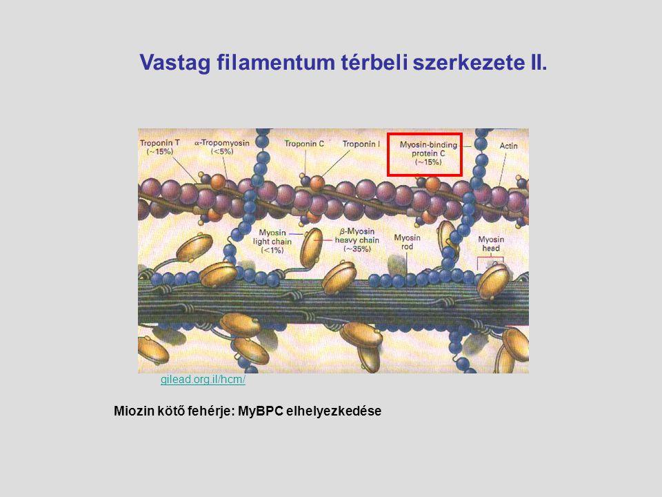 Vastag filamentum térbeli szerkezete II.