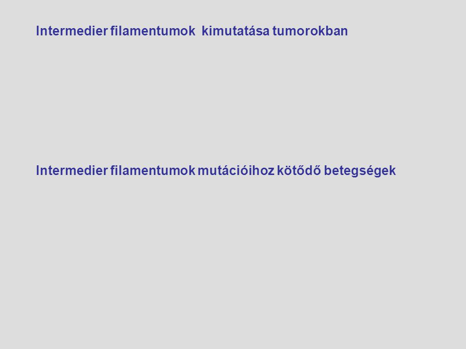 Intermedier filamentumok kimutatása tumorokban