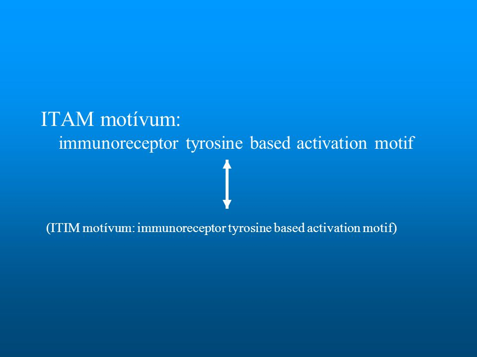 ITAM motívum: immunoreceptor tyrosine based activation motif