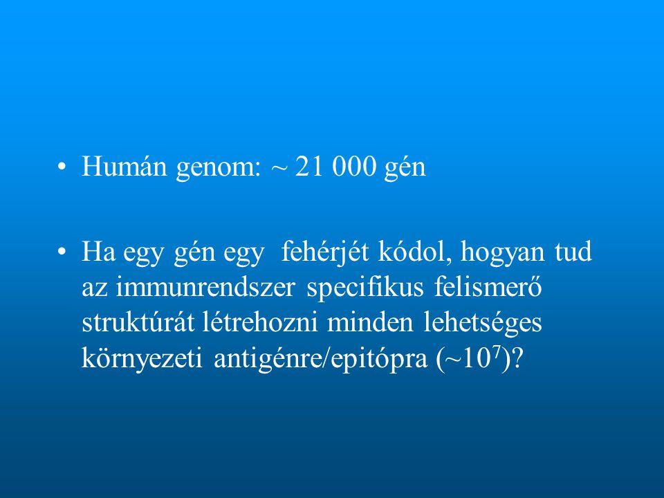 Humán genom: ~ 21 000 gén