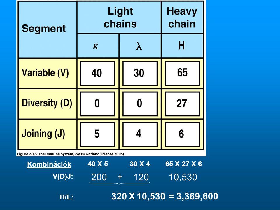 Kombinációk 40 X 5 30 X 4 65 X 27 X 6 V(D)J: 200 + 120 10,530 320 X 10,530 = 3,369,600 H/L: