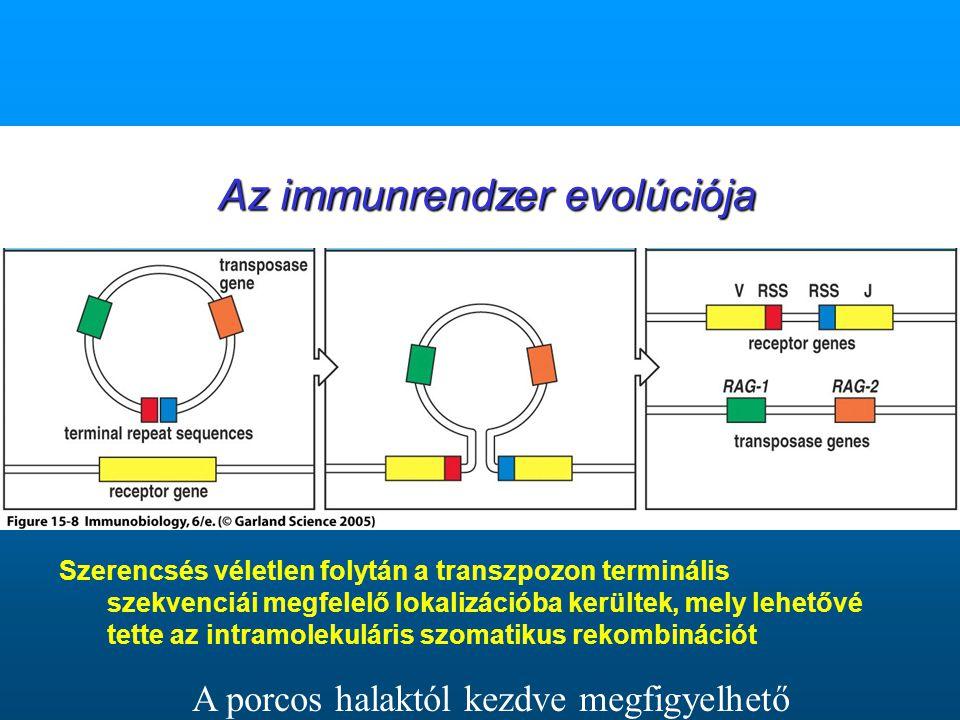 Az immunrendzer evolúciója