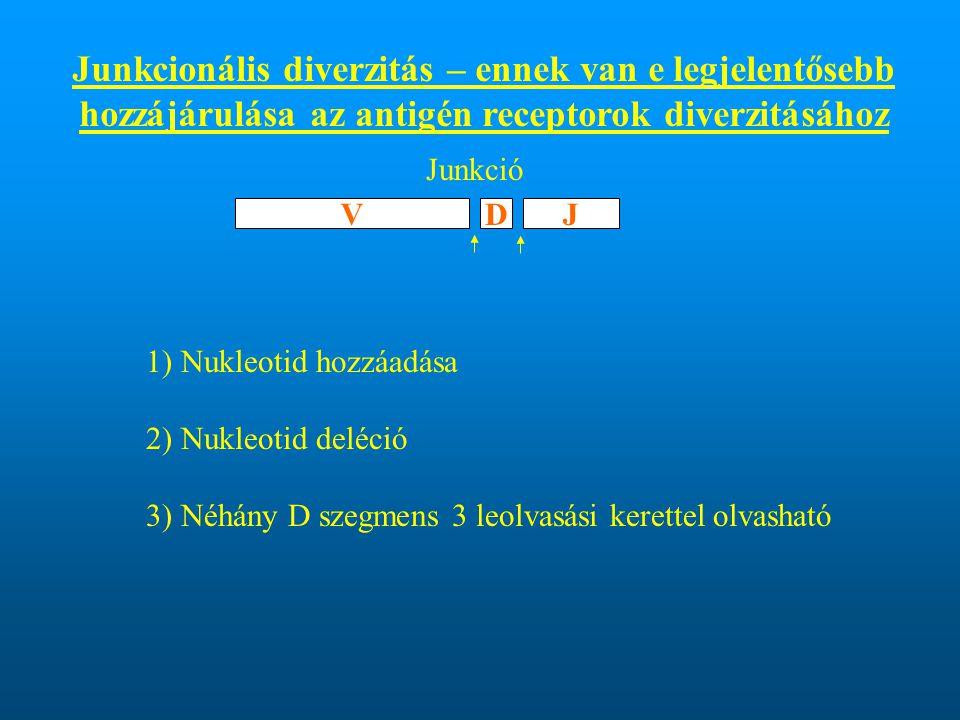 Junkcionális diverzitás – ennek van e legjelentősebb hozzájárulása az antigén receptorok diverzitásához
