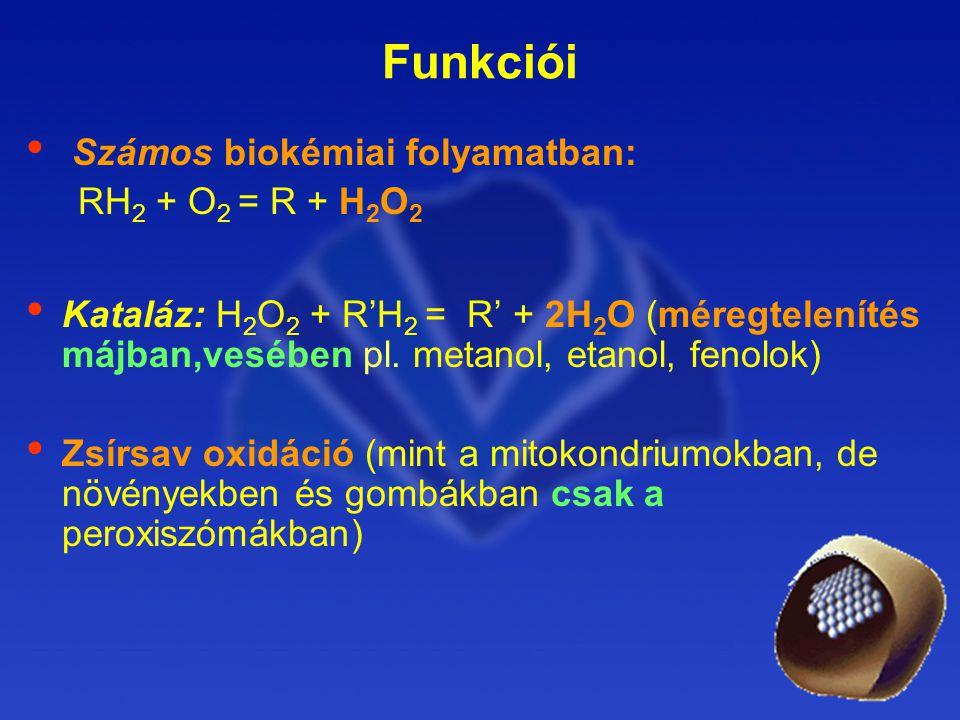Funkciói Számos biokémiai folyamatban: RH2 + O2 = R + H2O2