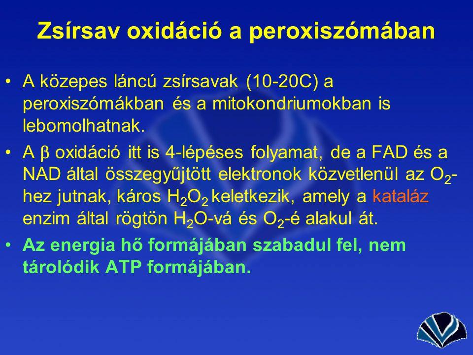 Zsírsav oxidáció a peroxiszómában