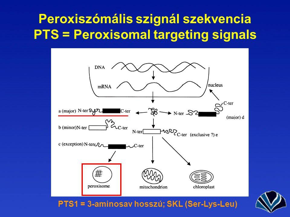 Peroxiszómális szignál szekvencia PTS = Peroxisomal targeting signals