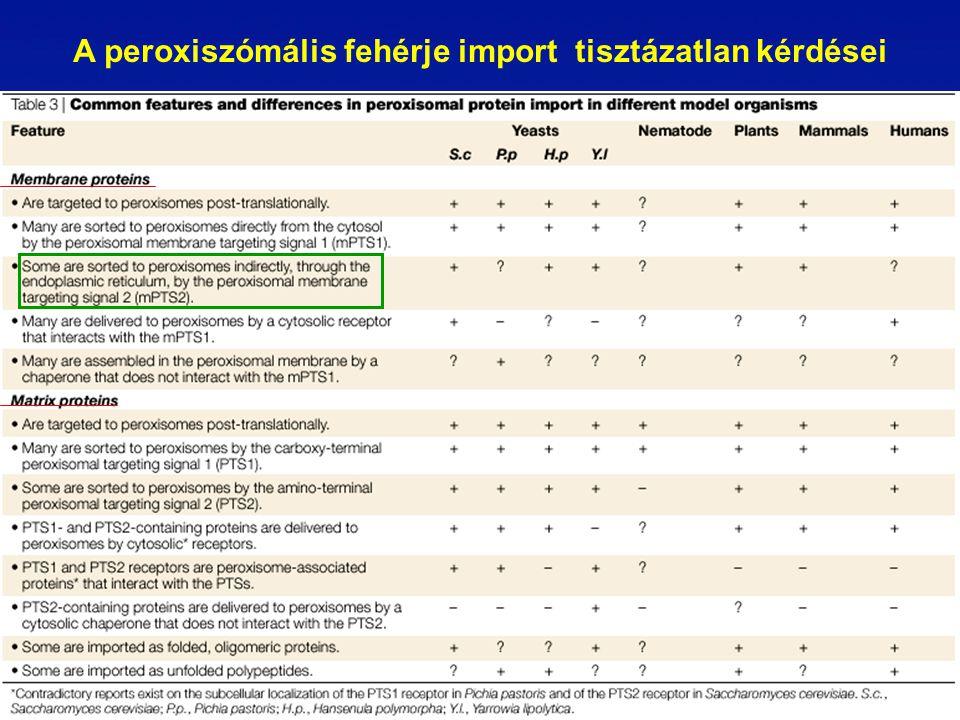 A peroxiszómális fehérje import tisztázatlan kérdései