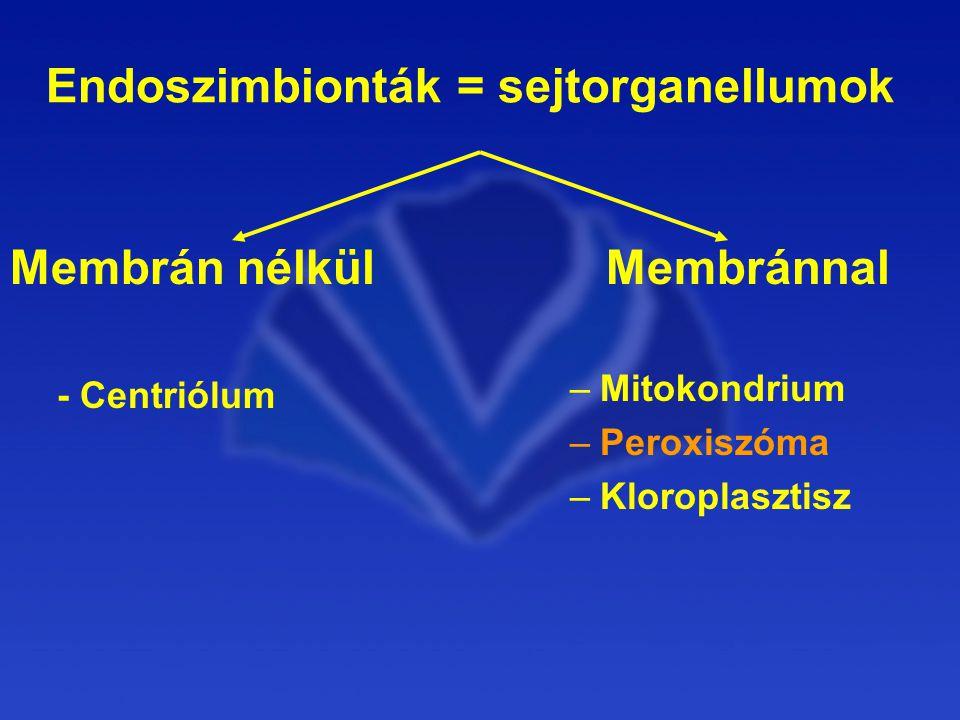 Endoszimbionták = sejtorganellumok