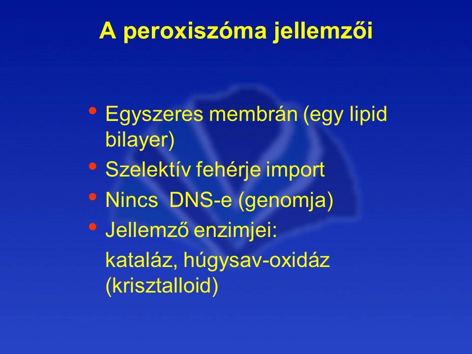 A peroxiszóma jellemzői