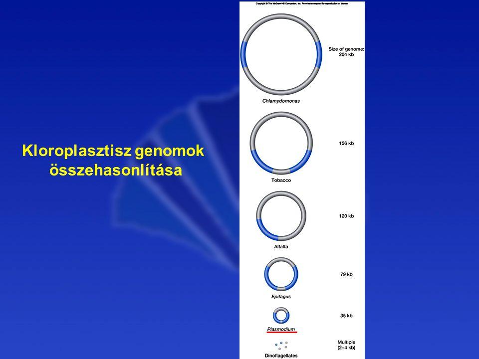 Kloroplasztisz genomok