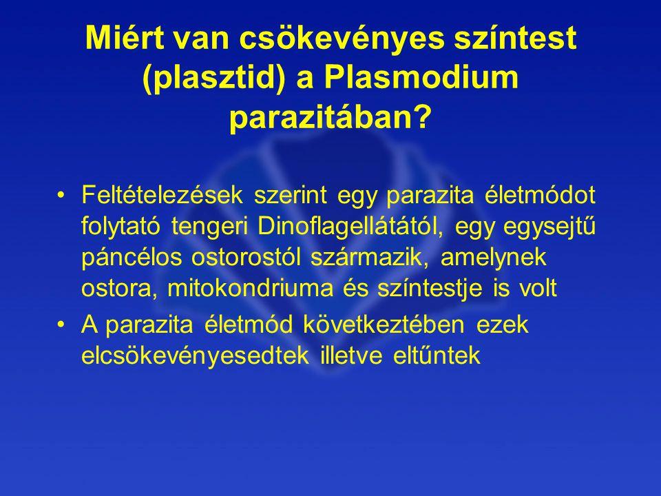 Miért van csökevényes színtest (plasztid) a Plasmodium parazitában