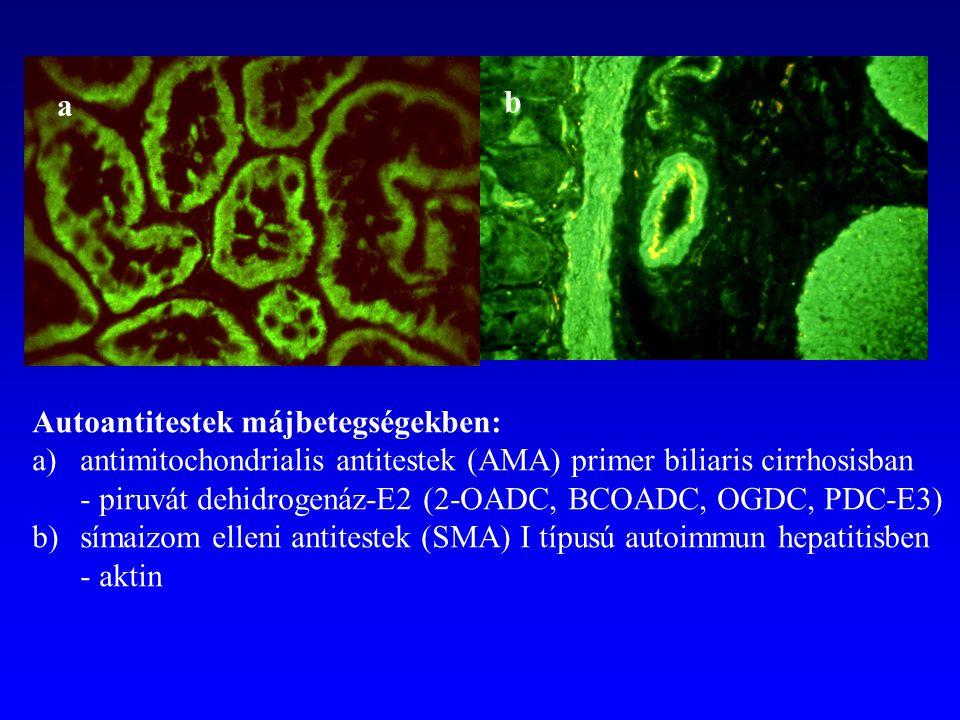 a b. Autoantitestek májbetegségekben: