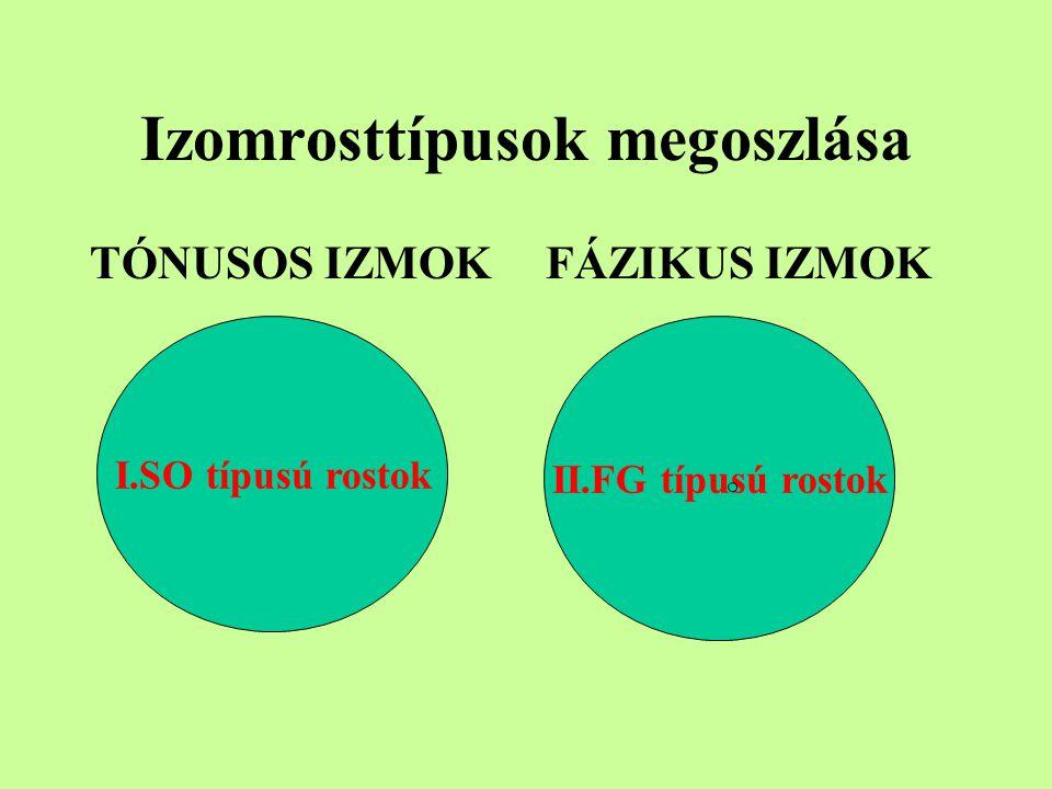 Izomrosttípusok megoszlása