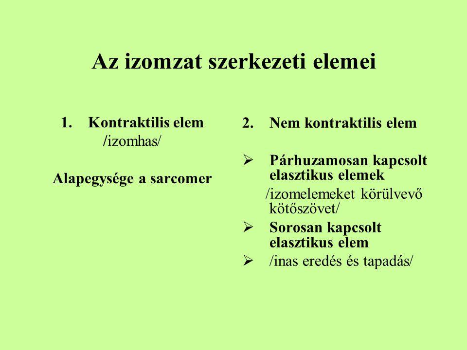 Az izomzat szerkezeti elemei