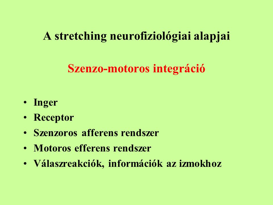 A stretching neurofiziológiai alapjai