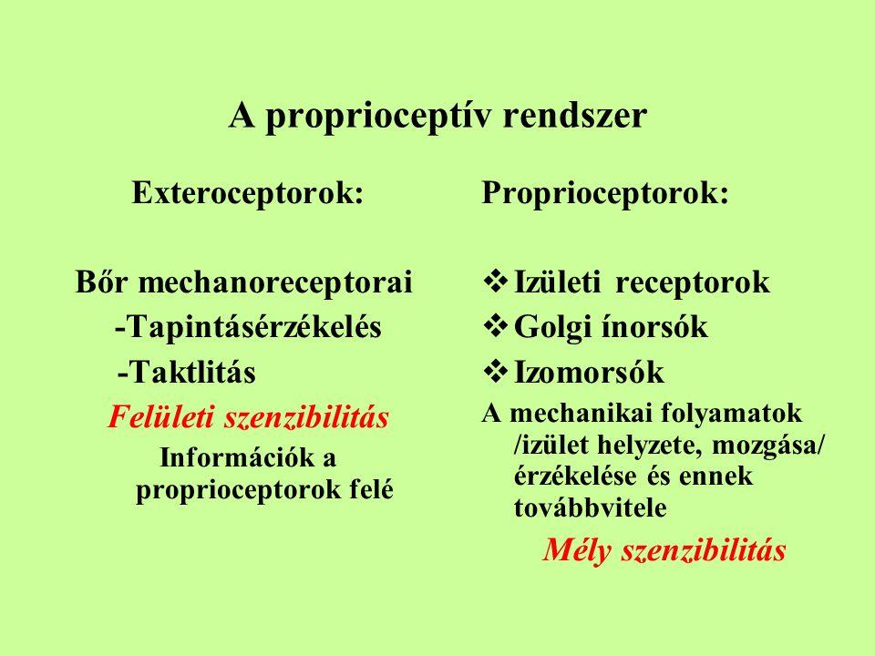 A proprioceptív rendszer