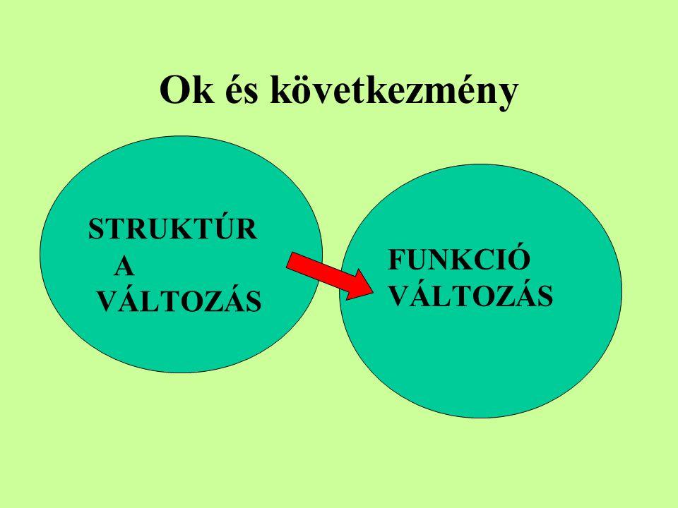Ok és következmény STRUKTÚRA VÁLTOZÁS FUNKCIÓ VÁLTOZÁS
