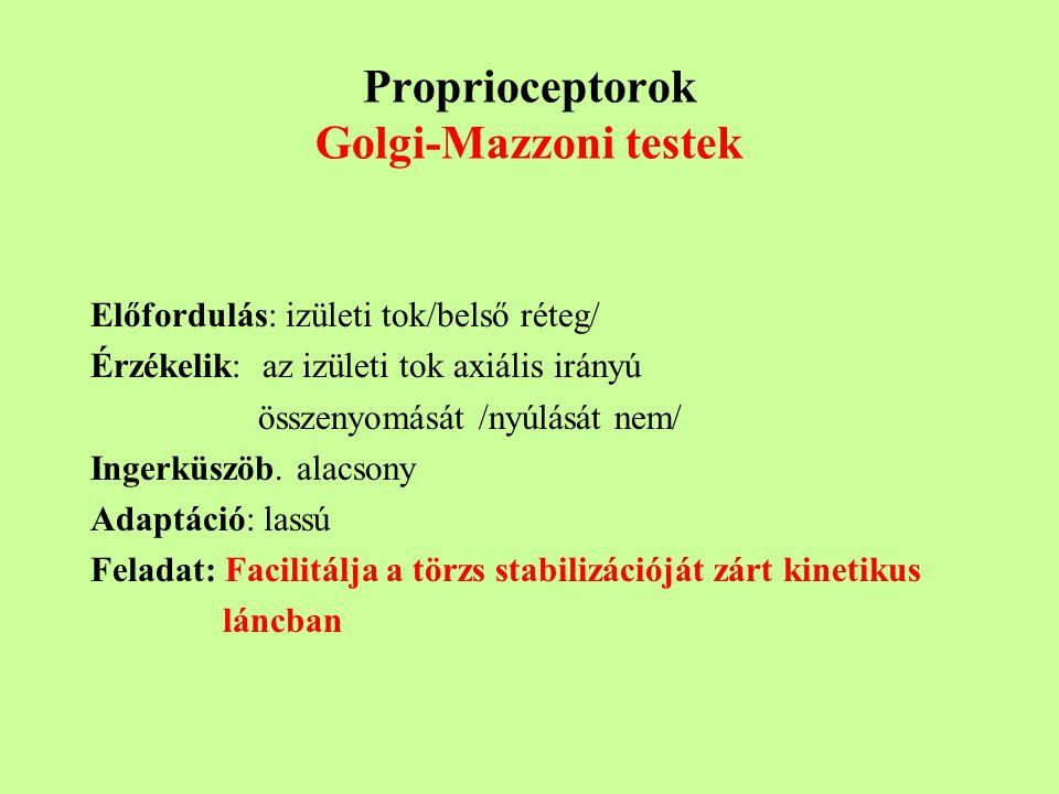 Proprioceptorok Golgi-Mazzoni testek
