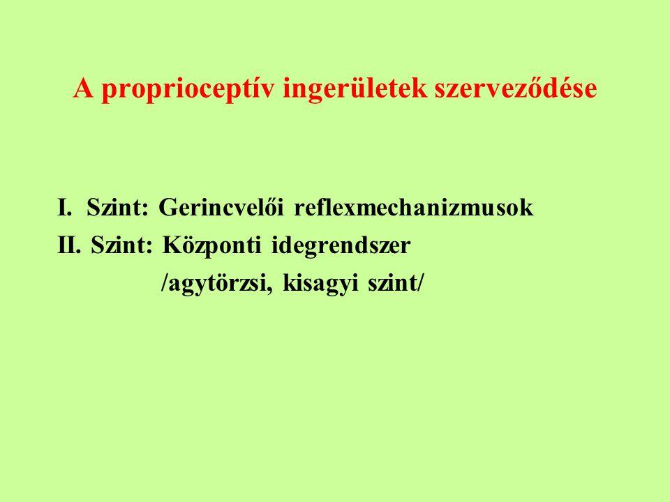 A proprioceptív ingerületek szerveződése