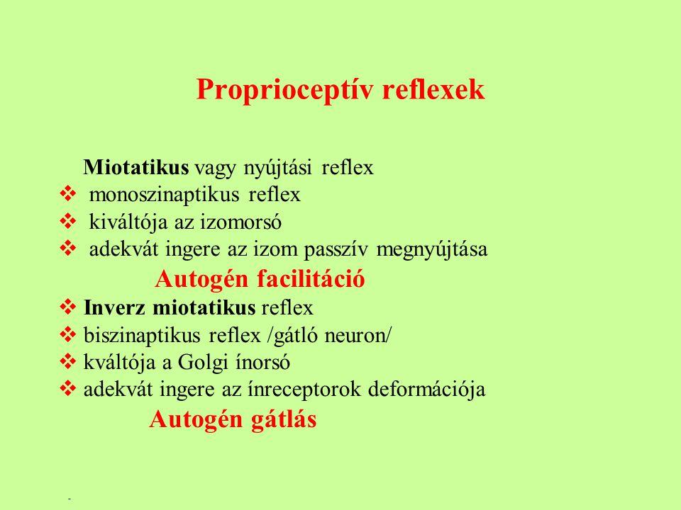 Proprioceptív reflexek