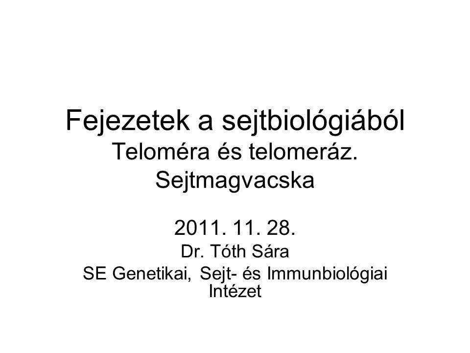 Fejezetek a sejtbiológiából Teloméra és telomeráz. Sejtmagvacska