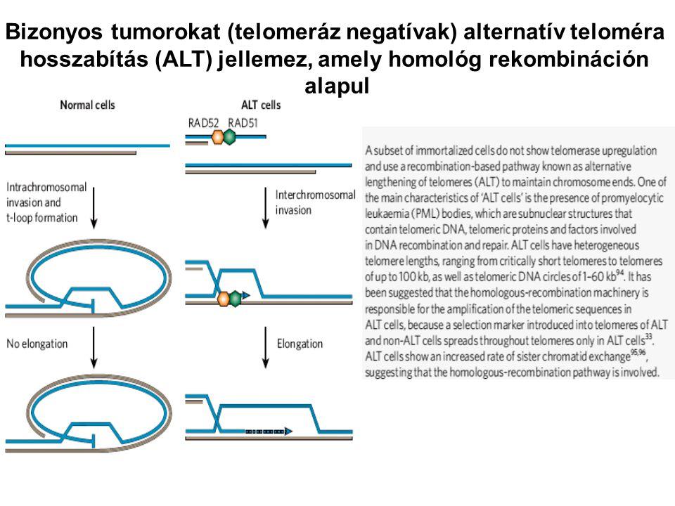 Bizonyos tumorokat (telomeráz negatívak) alternatív teloméra