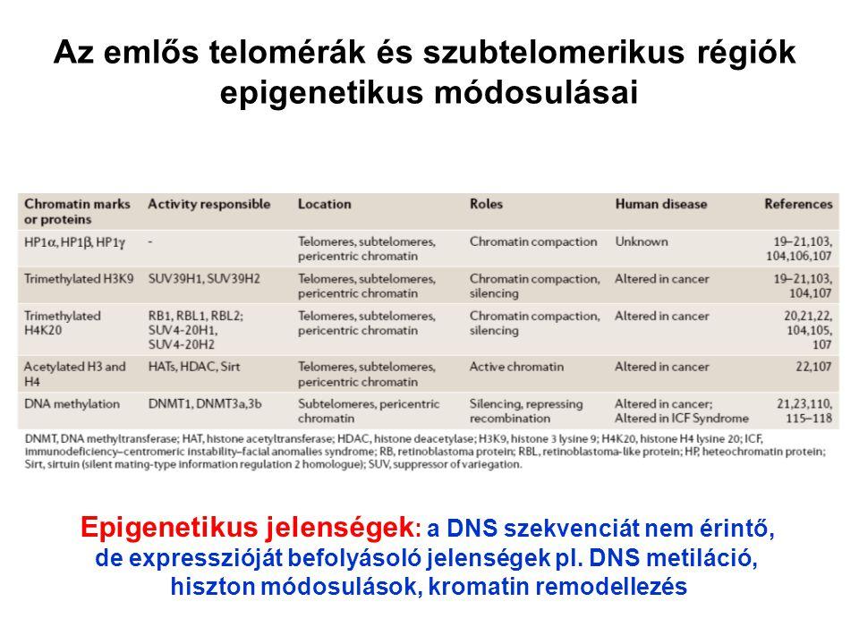Az emlős telomérák és szubtelomerikus régiók epigenetikus módosulásai