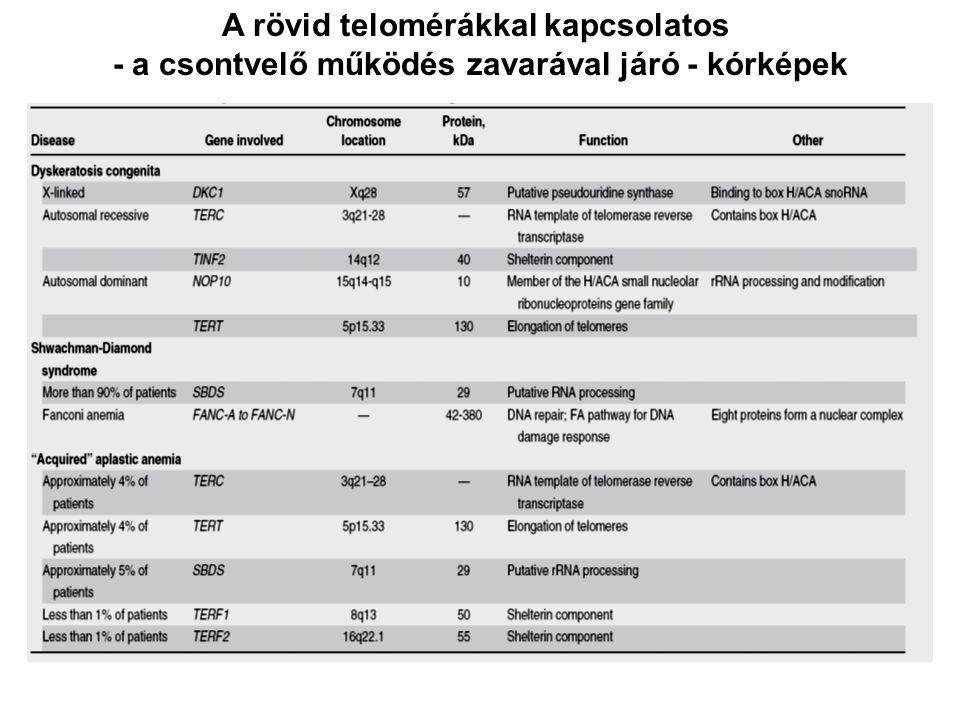 A rövid telomérákkal kapcsolatos
