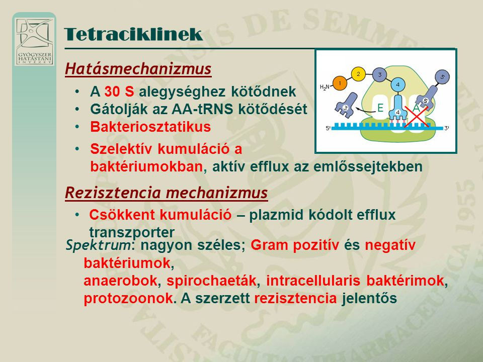 Tetraciklinek Hatásmechanizmus Rezisztencia mechanizmus