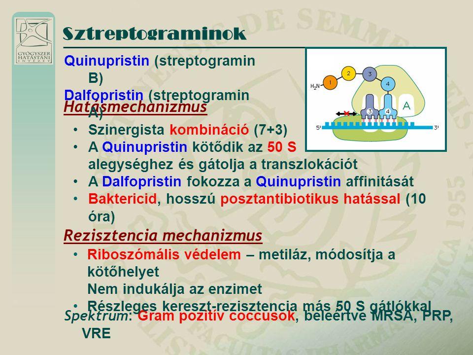 Sztreptograminok Hatásmechanizmus Rezisztencia mechanizmus