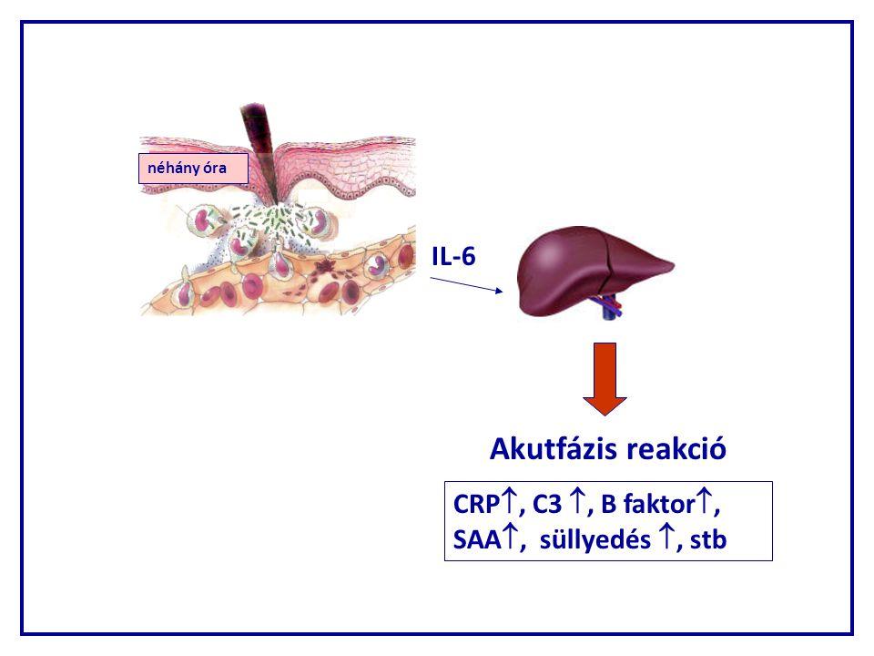 Akutfázis reakció IL-6 CRP, C3 , B faktor, SAA, süllyedés , stb