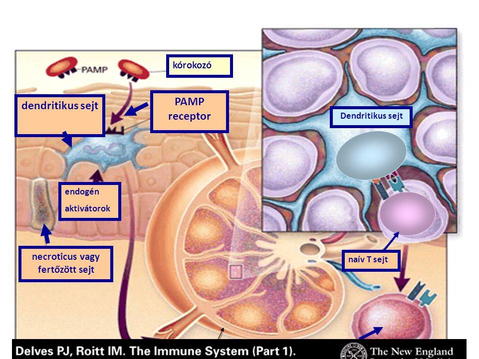 necroticus vagy fertőzött sejt